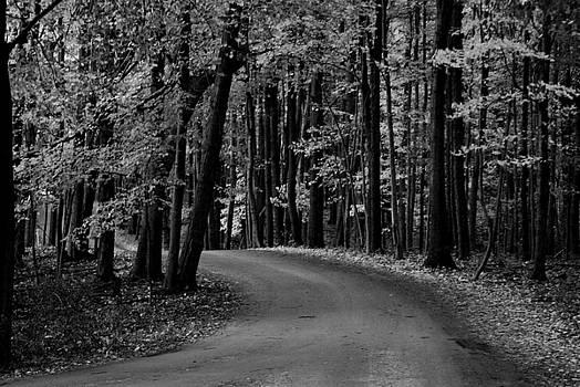 Michelle  BarlondSmith - Country Road I