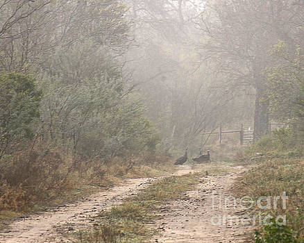 Country Road In The Morning by Diana Black