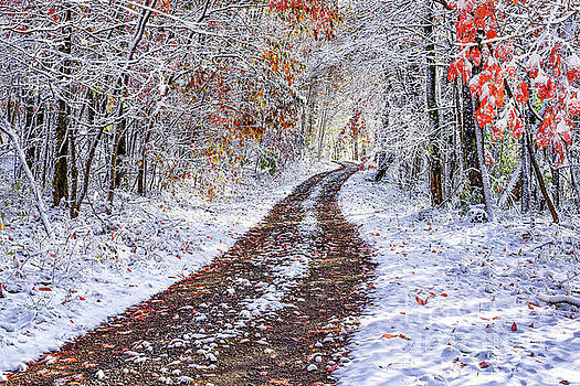 Country Road with Autumn Snow  by Thomas R Fletcher