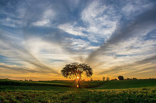 Country Sunset by Su Buehler