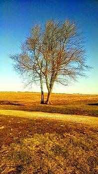 Country Tree Standing Alone by Dustin Soph