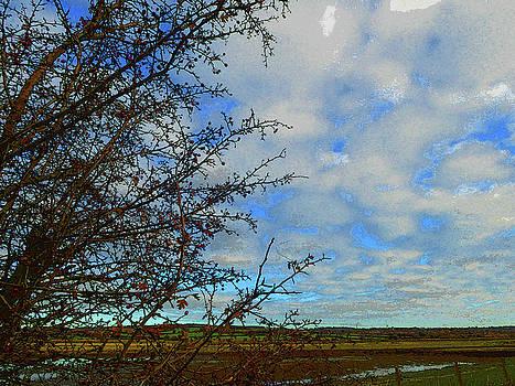 Countryside   by Carol Lynch