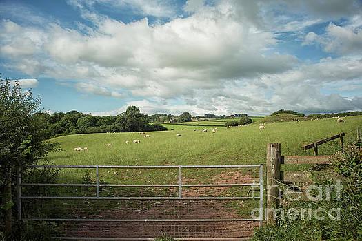 Patricia Hofmeester - Countryside in Wales