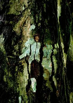 Couple on a tree by Rushan Ruzaick
