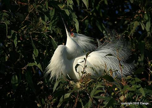 Courting by Elka Lange