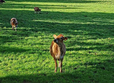 Thom Zehrfeld - Cow 821