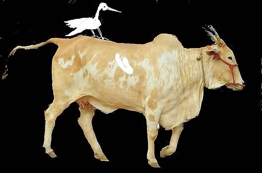 Anand Swaroop Manchiraju - COW AND CRANE