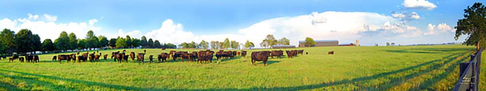 Sam Davis Johnson - Cow Expance
