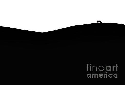 Cow Hill by Sean Davey