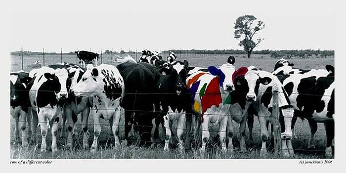 Cow Of A Different Color by Jim McKinnis