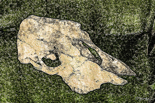 Ronda Broatch - Cow Skull 4