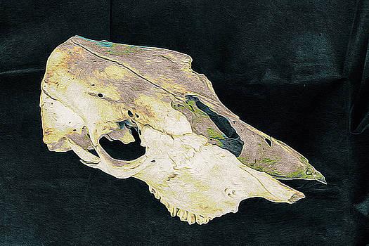 Ronda Broatch - Cow Skull 6