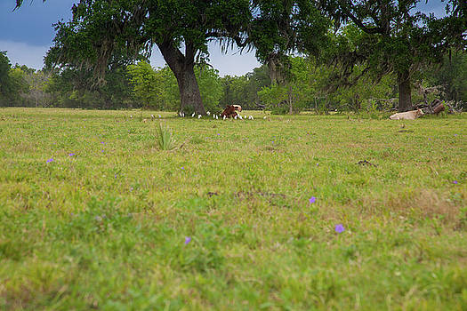 Cow Surrounded by her Fans by Judy Wright Lott