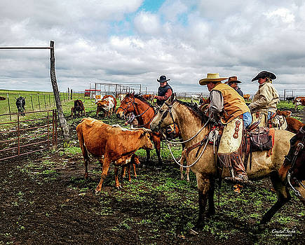 Cowboys vs Cow by Crystal Socha