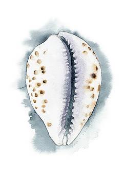Cowry Seashell by Kirsten Carlson
