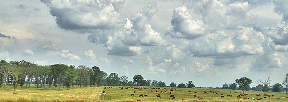 Cows 01 by Doug Mathewson