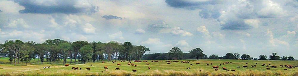 Cows 02 by Doug Mathewson