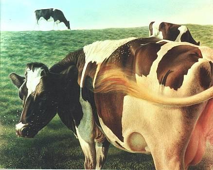 Cows 2 by Hans Droog