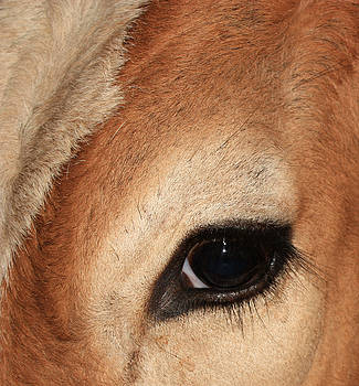 Cow's Eye by Mario Bennet