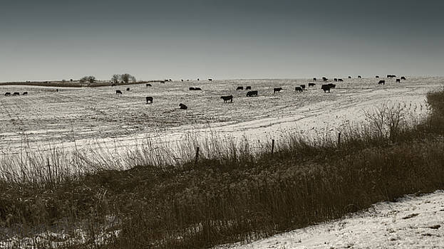 Art Whitton - Cows in a Snow Covered Field Nebraska