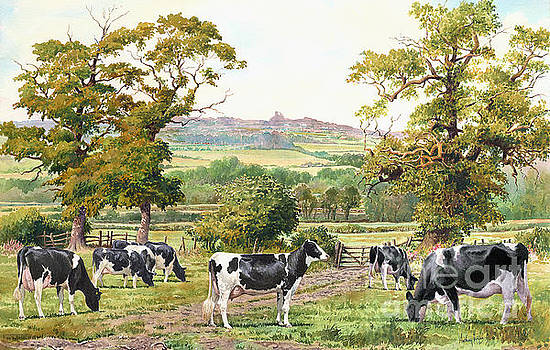Cows in castle meadows by Anthony Forster