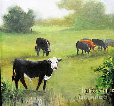 Cows in Pasture by Barbara Haviland