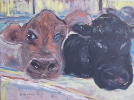 Cows in pen by Bob Smith