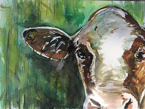 Cow's in the Corn 1 by Kathryn Armstrong