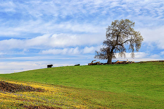 Cows On A Spring Hill by James Eddy