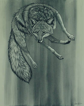 Coyote by Aaron Blaise