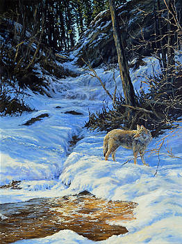 Coyote at Spring Creek by Jim Young