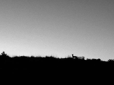 Mary Lee Dereske - Coyote at Sunrise