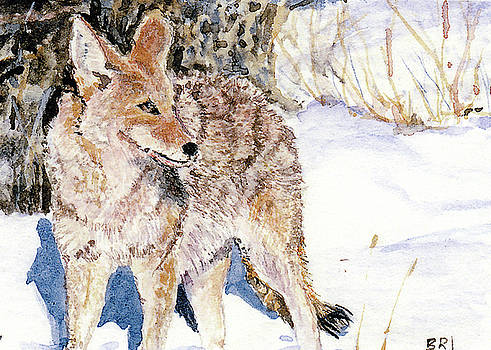 Coyote in the Snow by Barry Jones
