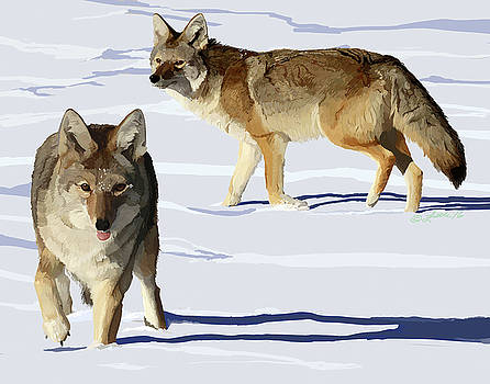 Coyote Pair by Pam Little