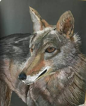 Coyote by Peggy Paulson
