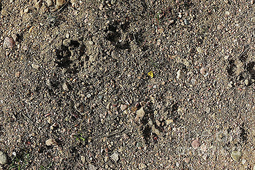 Jon Burch Photography - Coyote Tracks