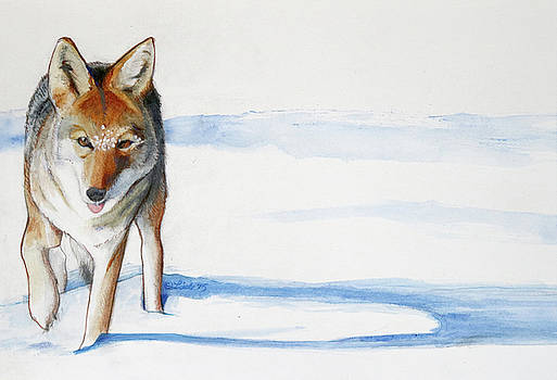 Coyote Trot by Pam Little