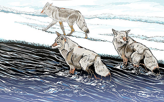 Coyotes at the Confluence Redux by Pam Little