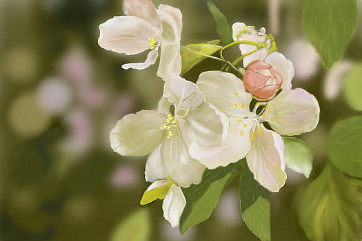 Crab Apple Blossoms by Dorothy Riley