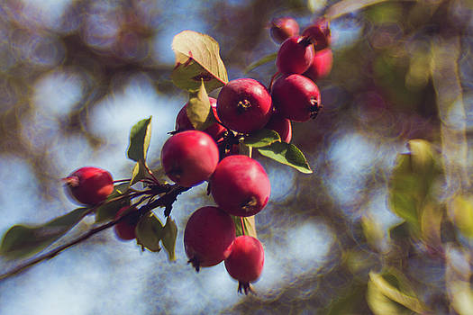 Crab apple time by Sharon Wilkinson