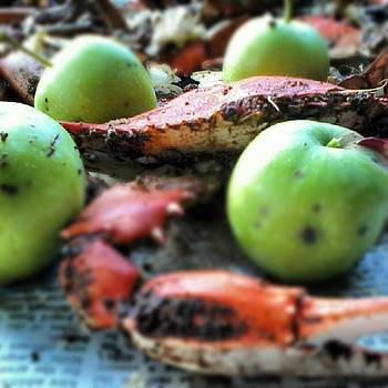 Crab apples by Danny Smith