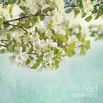 Crabapple blossoms by Priska Wettstein