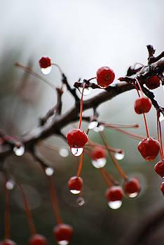 Crabapple Rain Berries by Patricia Gapske