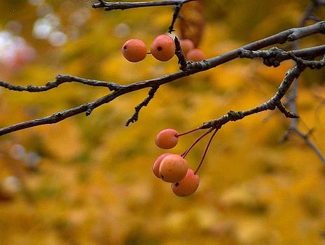 Crabapples in Fall   by Denise   Hoff
