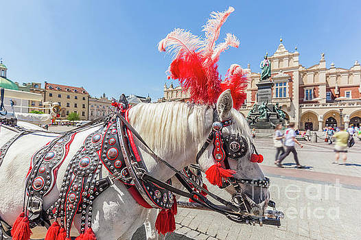 Michal Bednarek - Cracow, Poland. Traditional horse carriage on the main old town market square.