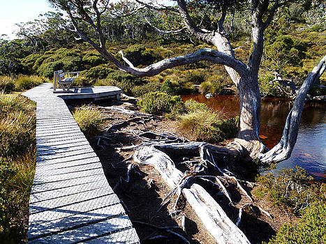 Cradle Mountain Track by Sarah King