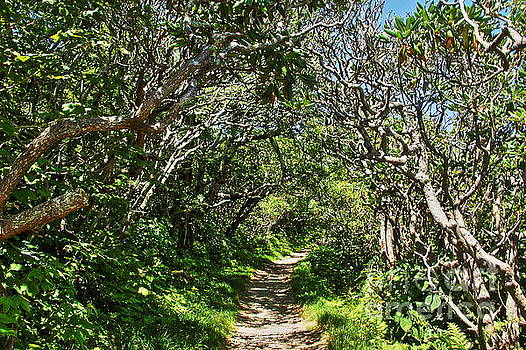 Allen Nice-Webb - Craggy Gardens Walkway