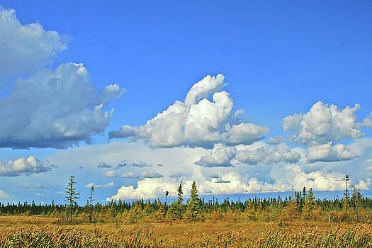 Cranberry Bog Cloud Bank by Bill Morgenstern