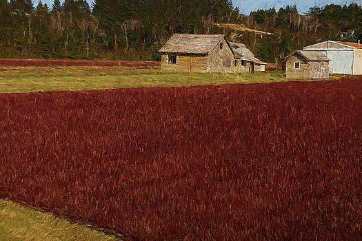 Mike Penney - Cranberry Bog