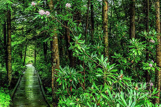 Cranberry Glades Boardwalk by Thomas R Fletcher